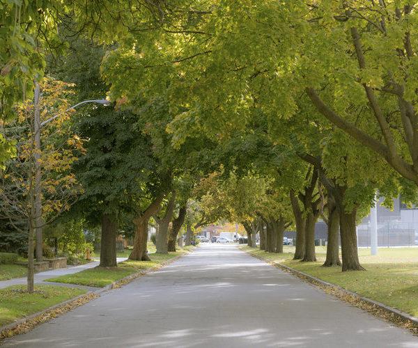 trees queensway toronto lakeshore condos